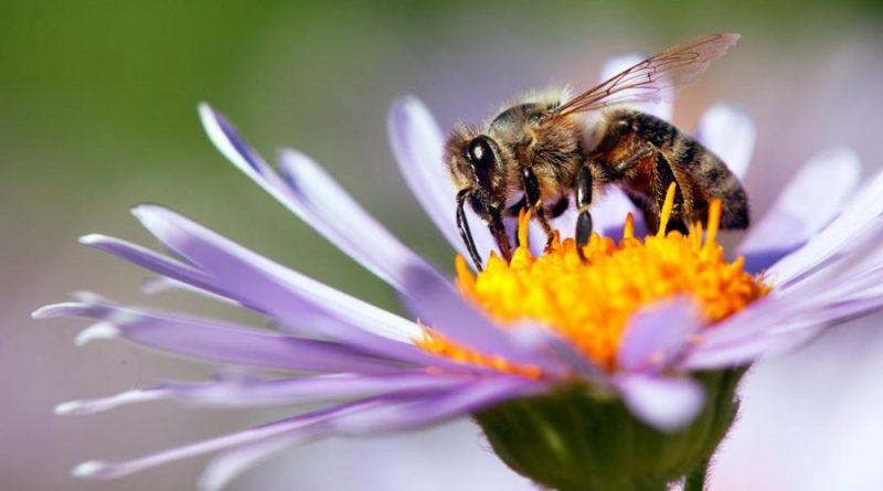 giornata mondiale delle api #CosaNonVa Pasquale Valiante Presentatore #PasqualeValiante #FotoNonVa #segnalazione #segnalazionefotografica www.pasqualevaliante.it #videomakeritalia #copywriter #comunicazione